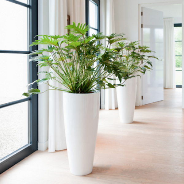 Florist Interior Plants Madison WI