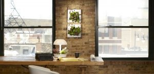 Ambienta grow lamp office plants red square flowers