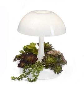 Ambienta grow lamp with succulents