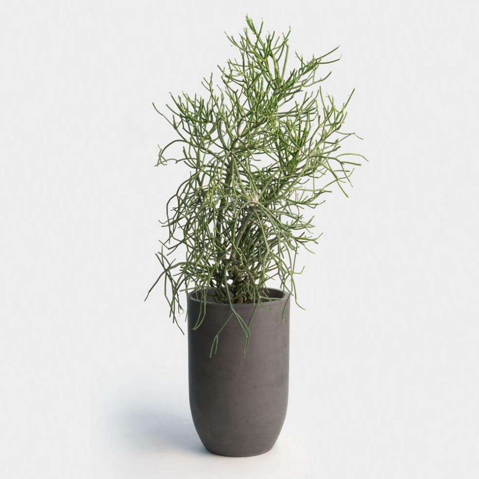 office plant services madison wi