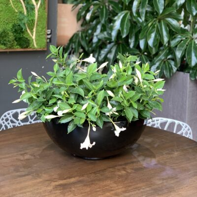 Seasonal Tabletop Planter
