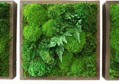Moss Wall 4