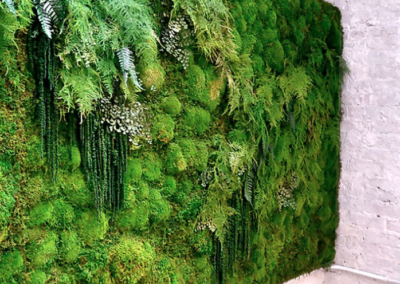 Moss Wall 2