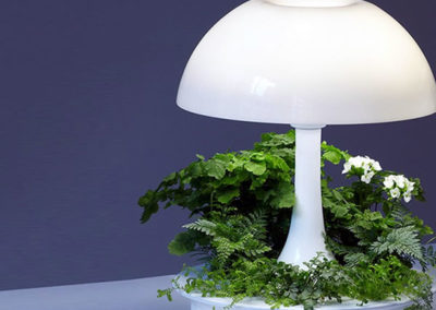 Ambienta Lamp - Red Square Flowers
