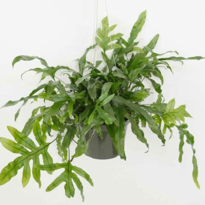 houseplants madison wi